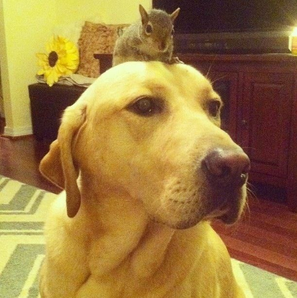 Stoic Lab and Squirrel